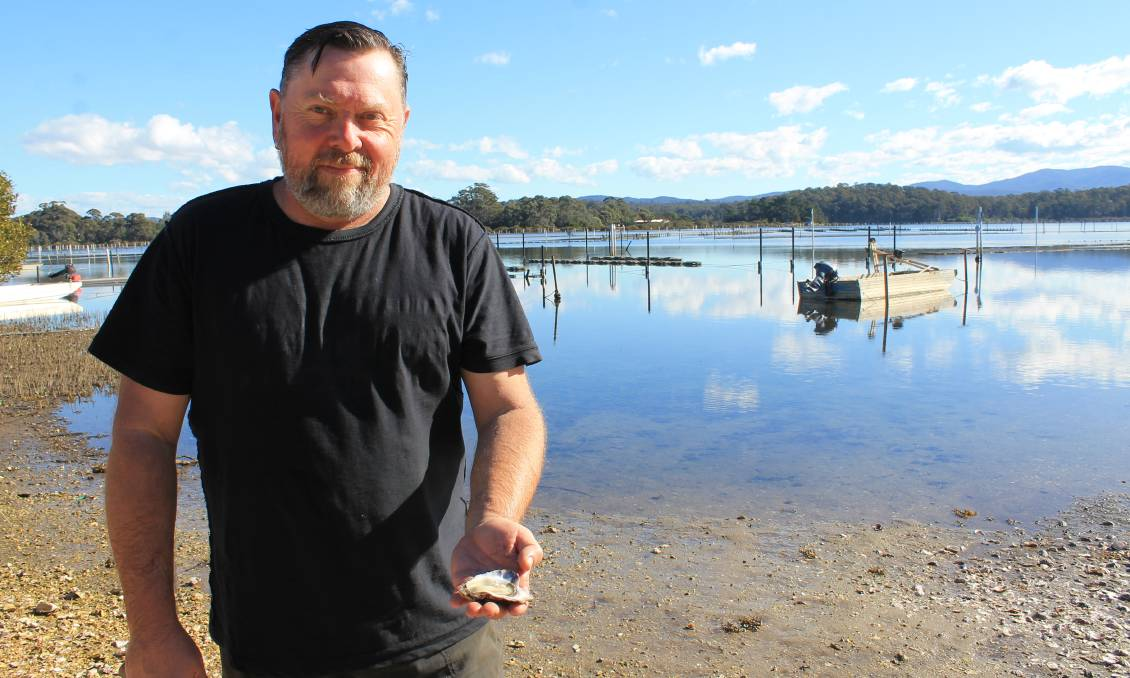 WINNER: Shane Buckley holds one of his oysters on a beautiful day at his farm on Wapengo Lake in 2016.